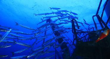 Alexandria Wreck Larnaca Cyprus