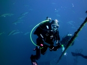 Azure Private Diving